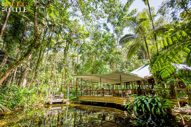 Contemporary Intimate Wedding Where The Rainforest Meets Reef Cape Tribulation