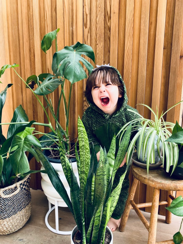 5 of the best low maintenance house plants.