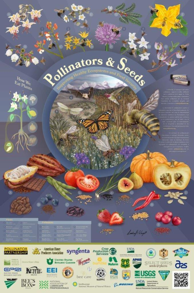Pollintator-Poster-2018-low-res