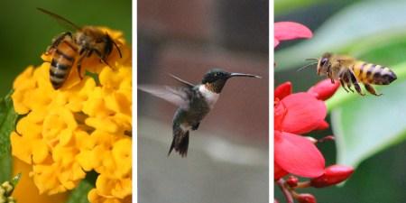 pollinator 3 lmv