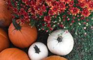 Stewart Farms Fall Opening Day – Saturday, Sept. 26