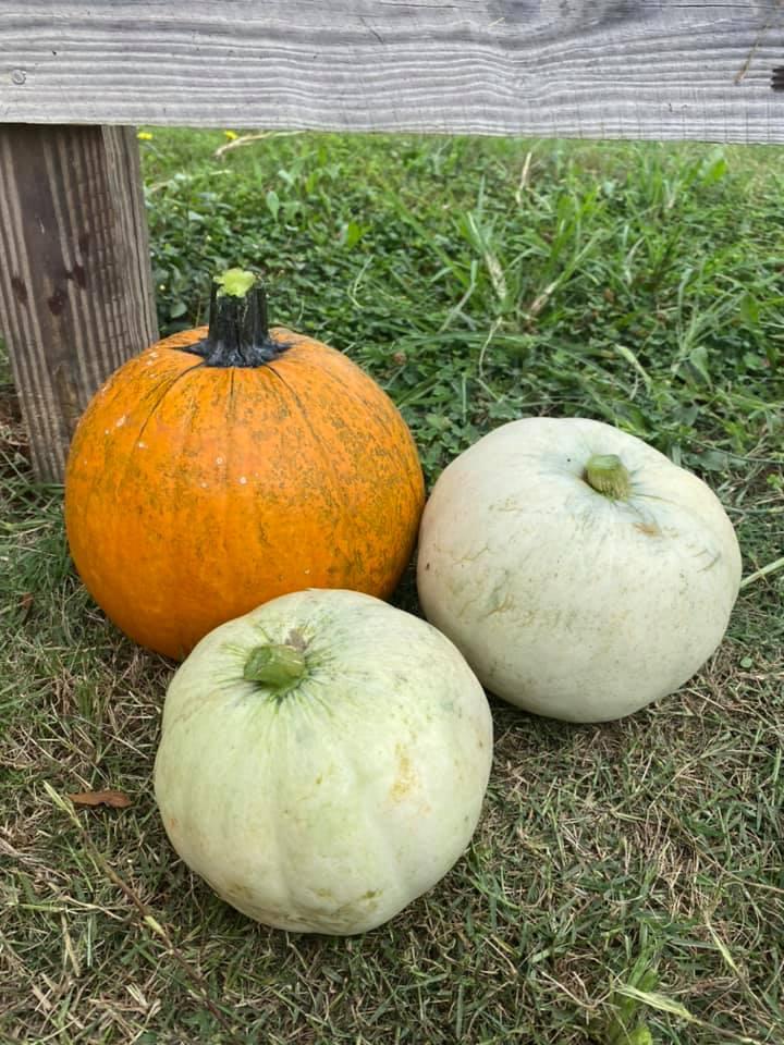 Greyrock Farms and Greens Acres Produce Fall Festivities