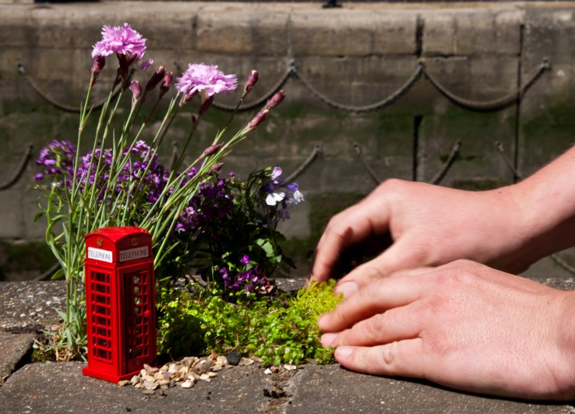 The pothole gardener's hands at work