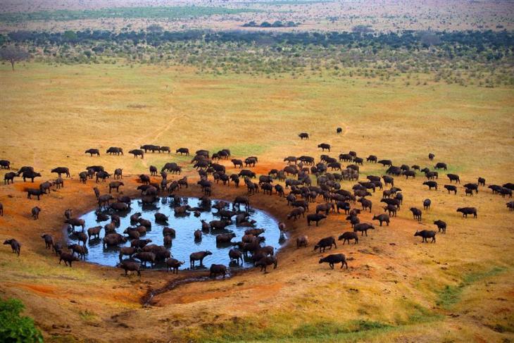AFR-101496-Tanzania_MasaiMara-2-TanzaniaMasaiMara