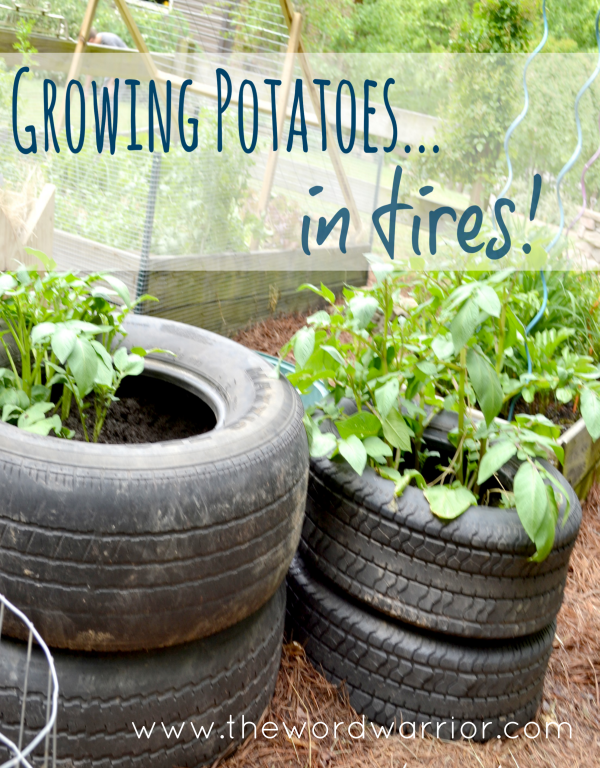 Blog - WW-Farm Life-potato-tower