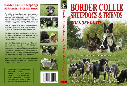 The proposed cover of our latest Border collie fun DVD includes a Chihuahua, a Papillon, a Great Dane and a lurcher