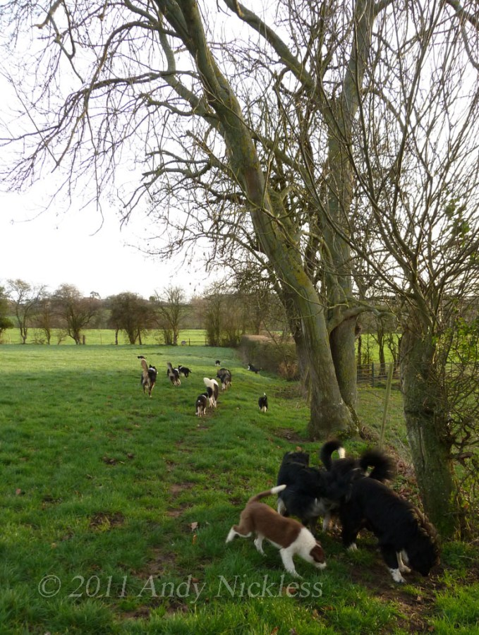 Walking our sheepdogs in the January sunshine