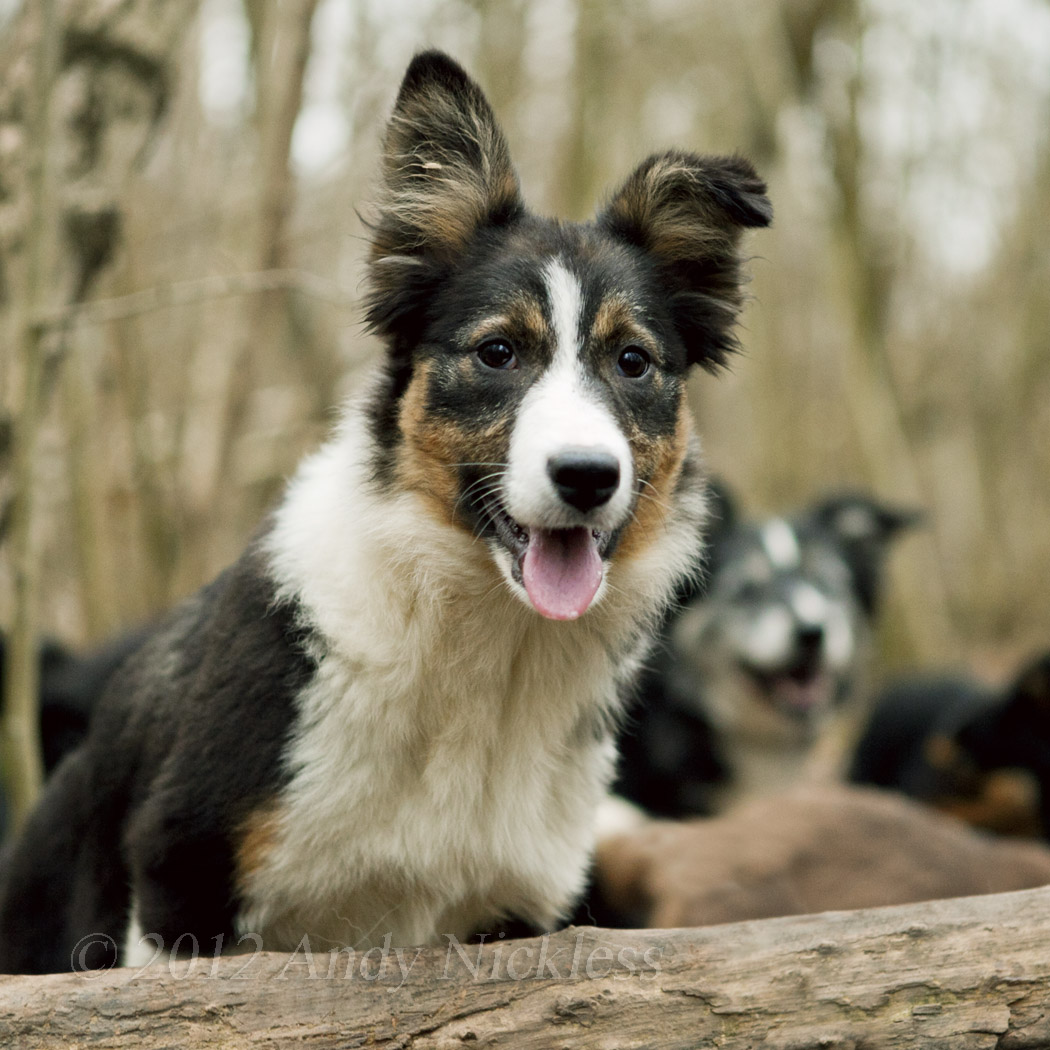 Accidents and emergencies | | The Working Sheepdog Website