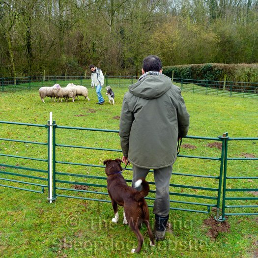 "Bob Lever and ""Max the Welsh"" watch a sheepdog training session"