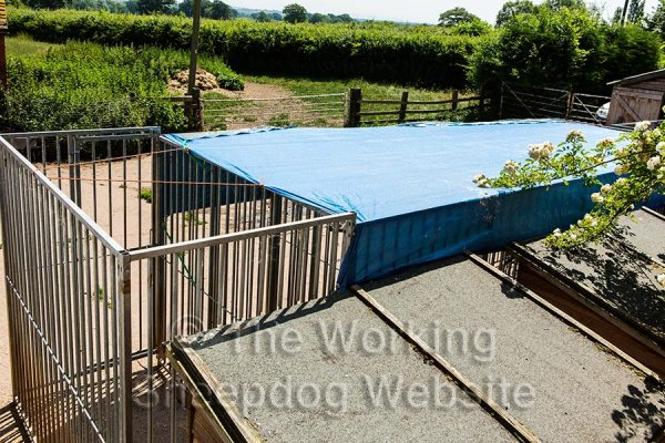 A blue tarpaulin covering the dog kennels