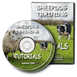 Promotional pic of our Sheepdog Training Tutorials 2xDVD set