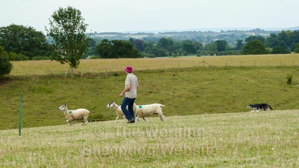 Mel and Andy at Powick sheepdog trials