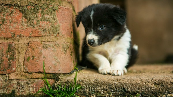A puppy lying on the concrete close to a brick pillar