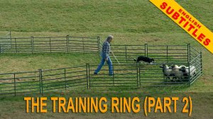 title image of our sheepdog training tutorial video with optional English subtitles
