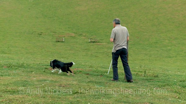 A sheepdog handler sending his dog off on its outrun to gather sheep