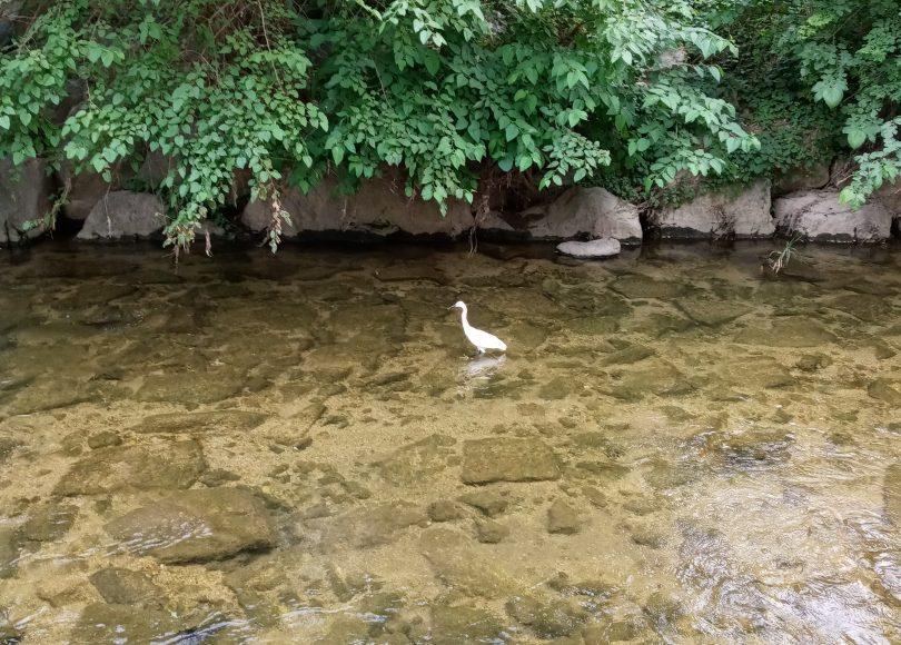 cheongjecheon streambed park