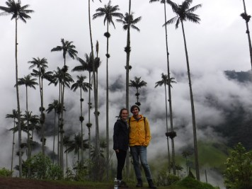 Wax Pams in Cocora Valley