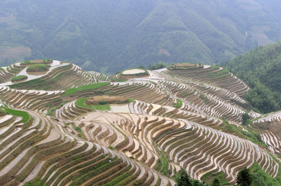 longji-rice-terrace-9