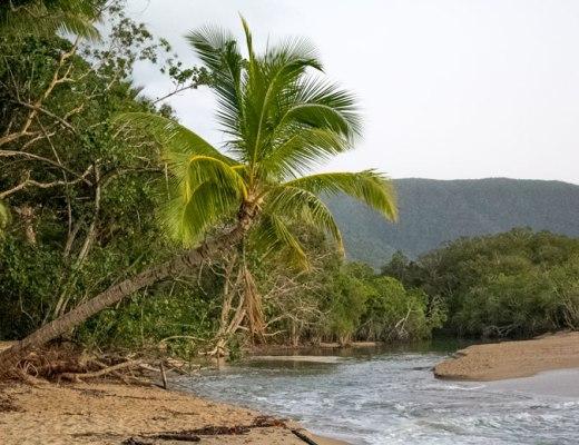 Palm Tree at Kewarra Beach