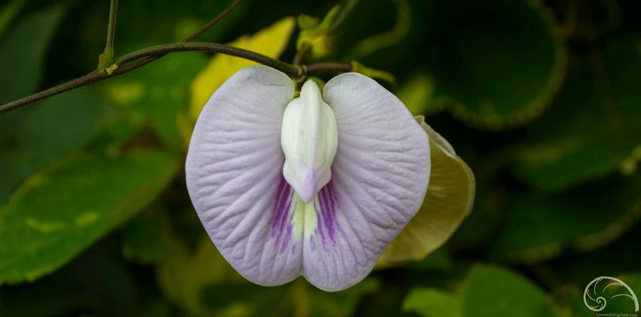 Passage-Peak-flower