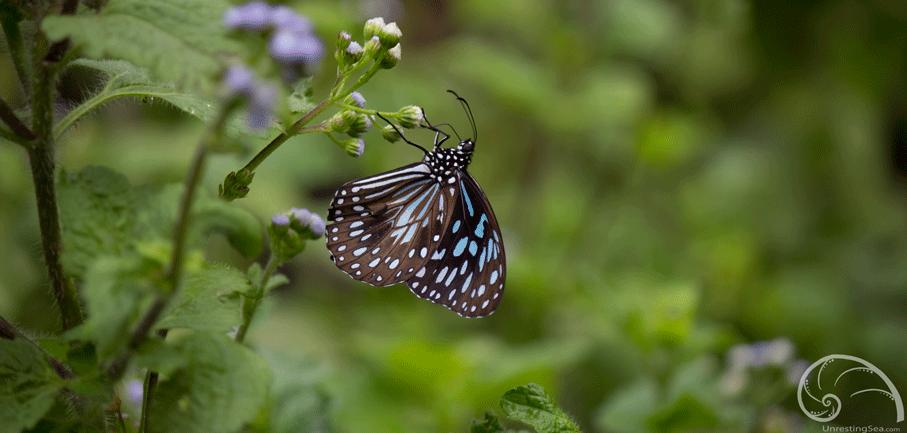 PassagePeak-butterfly