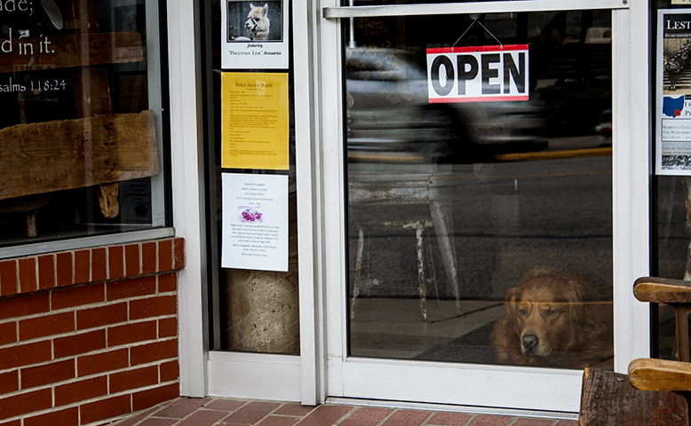 dog in the window of a shop in Marietta, Ohio