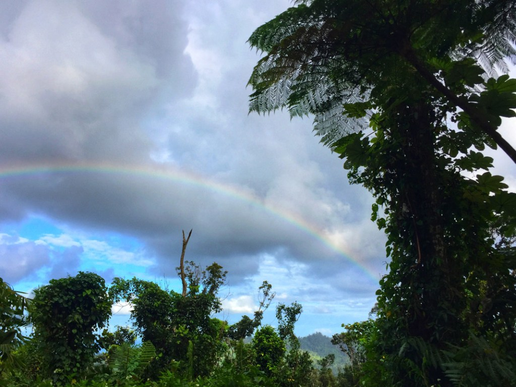 rainbow over el Yunque in Puerto Rico