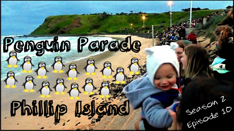 Penguin Parade Phillip Island