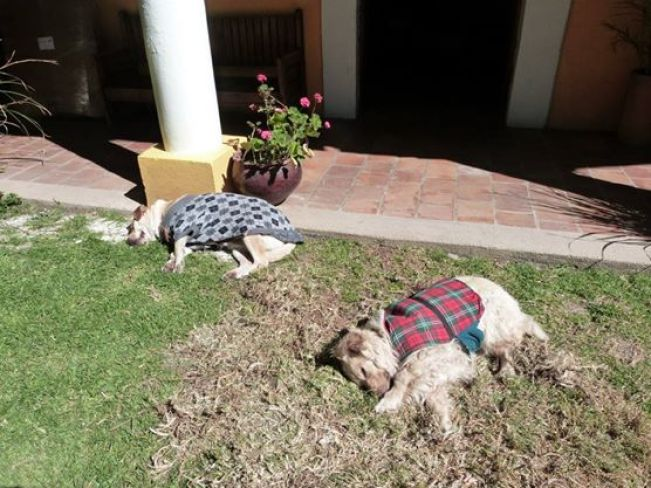 Dogs at Rossco Hostel, San Cristobal de las Casas, Chiapas, Mexico