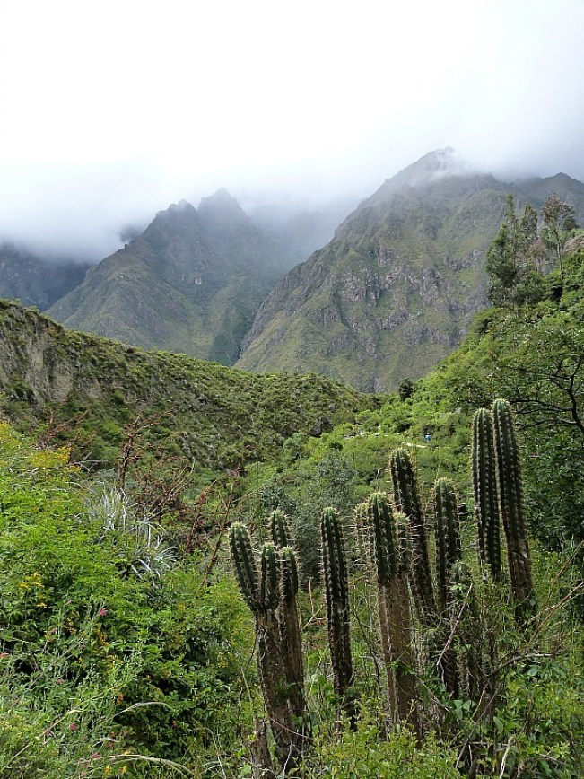 Cacti and mountains on the first day of the world famous Inca Trail in Peru