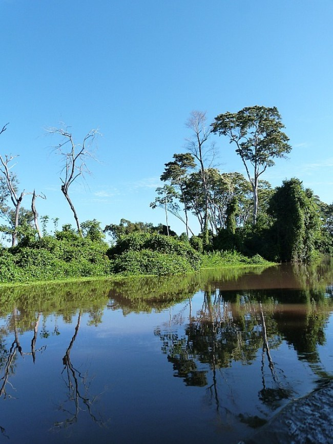 Amazon river tributary in the Amazon Basin of Bolivia