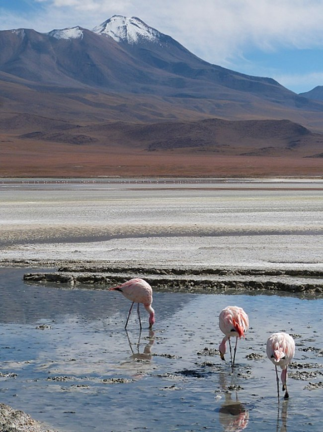 Flamingos and mountains in remote South West Bolivia