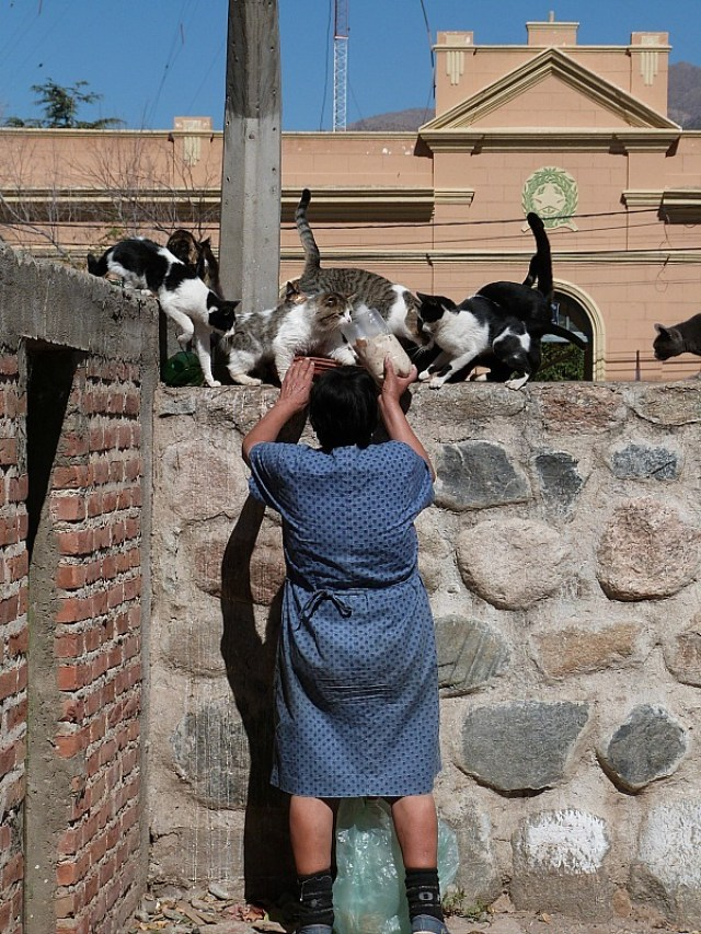 Local lady feeding stray cats in Cafayate, Northern Argentina