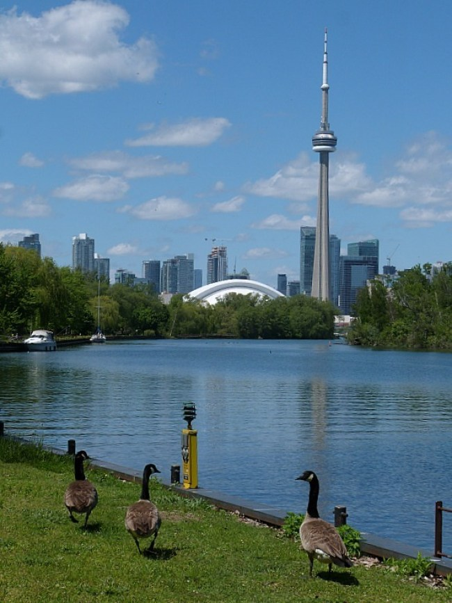 CN Tower in Toronto from the Harbour Islands