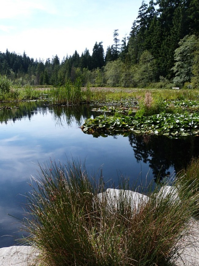 Beaver Lake in Stanley Park, Vancouver