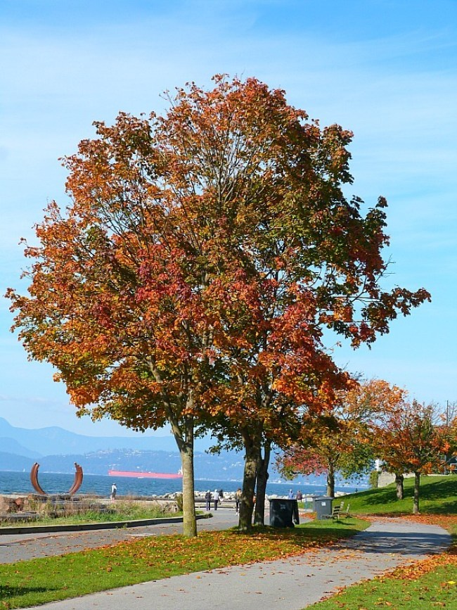 Beautiful Vancouver in the Fall