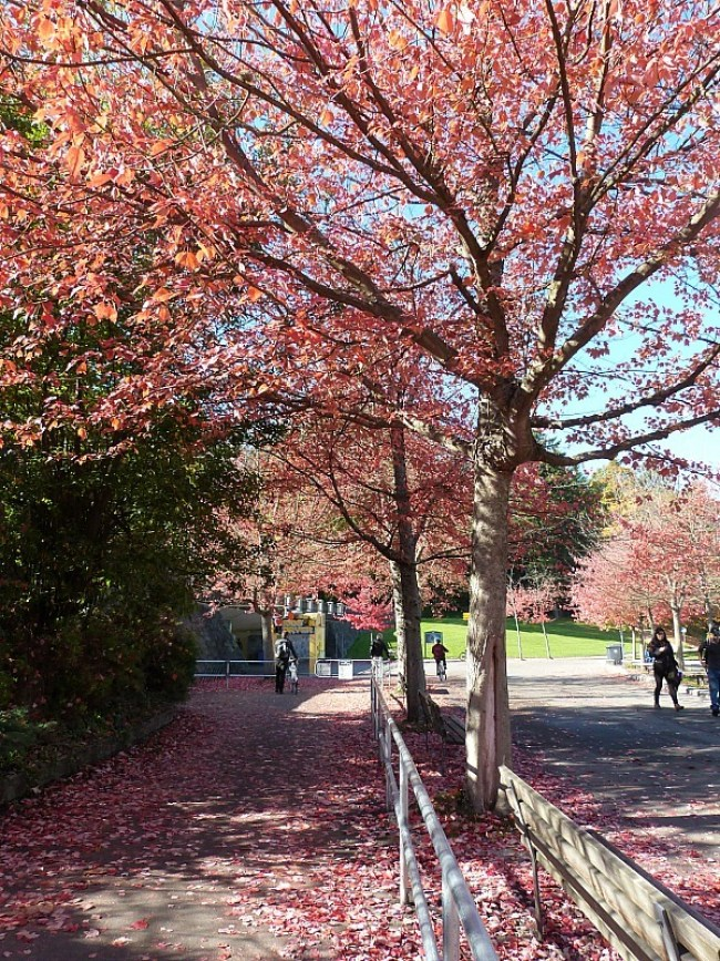 Vancouver during Fall