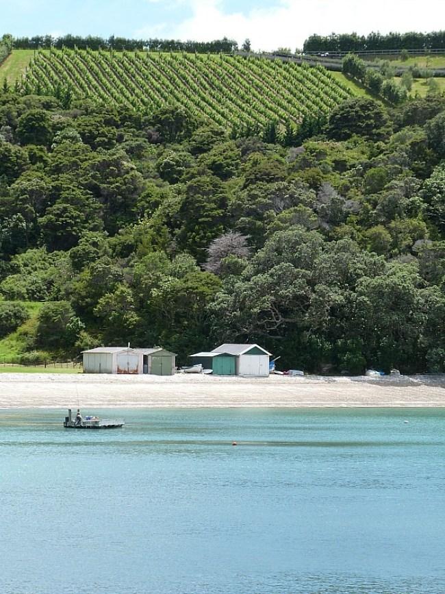 Turquoise ocean around Waiheke Island in Auckland, New Zealand