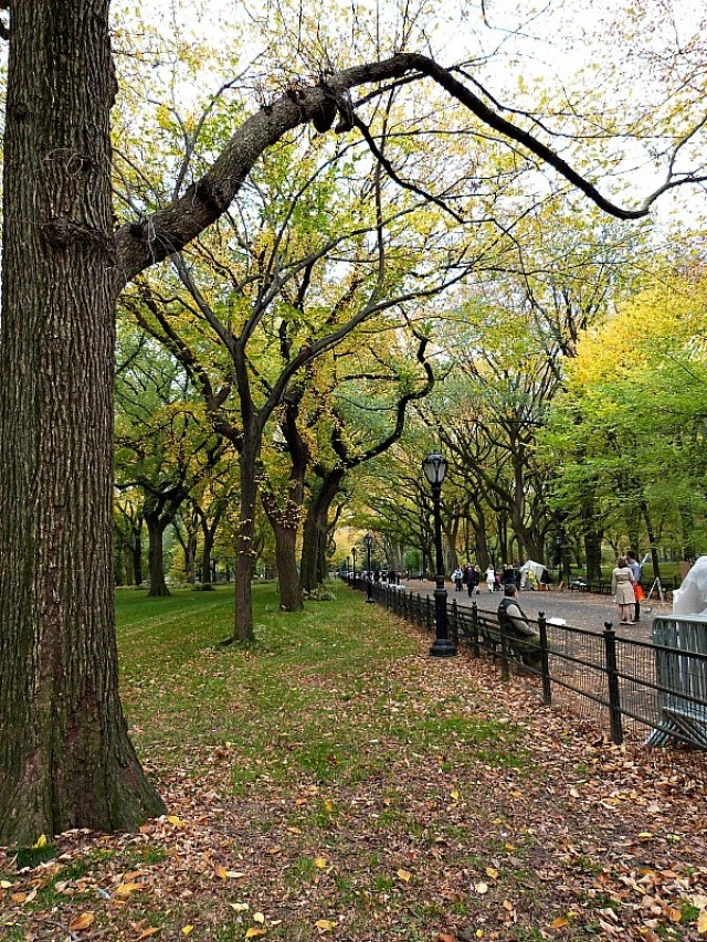 New York is the perfect temperature in fall - one of the best reasons to experience fall in North America