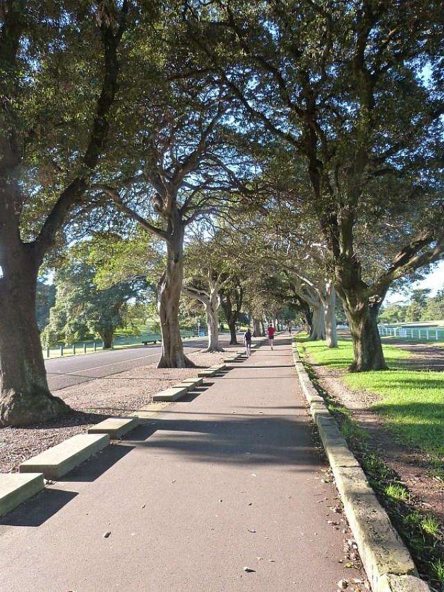 Sydney City Parks - One of the 30 reasons why I love Sydney