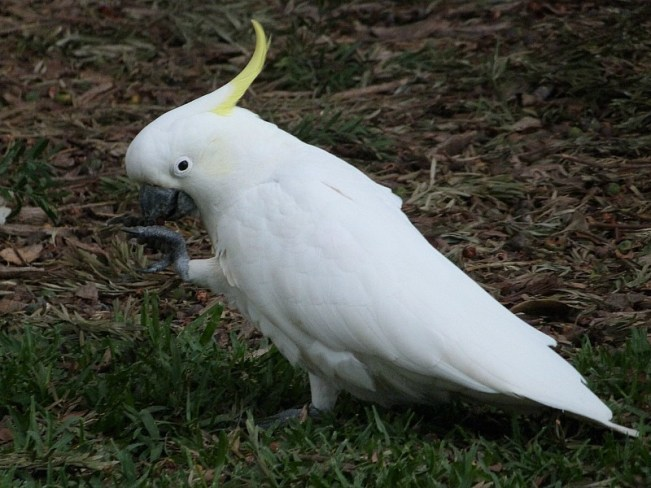Tropical Australian birds - one of the 30 Reasons Why I Love Sydney
