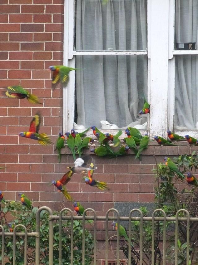 Tropical Australian birds - one of the 30 Reasons Why I Love Sydney