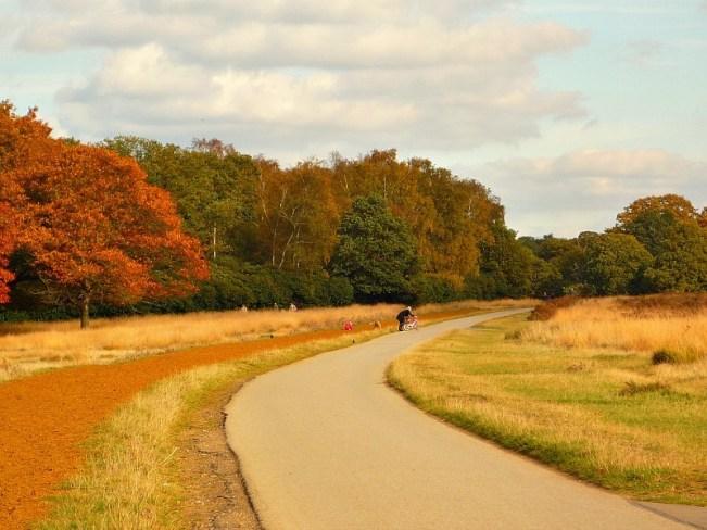 Richmond Park in Richmond in Greater London
