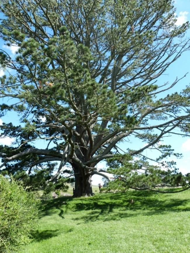 Party tree at the Hobbiton Movie Set in New Zealand