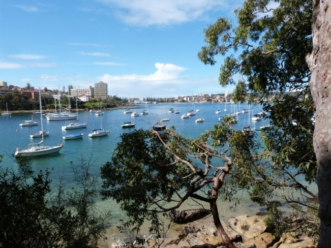 Beautiful harbour views on the Manly to Spit walk in Sydney's northern beaches