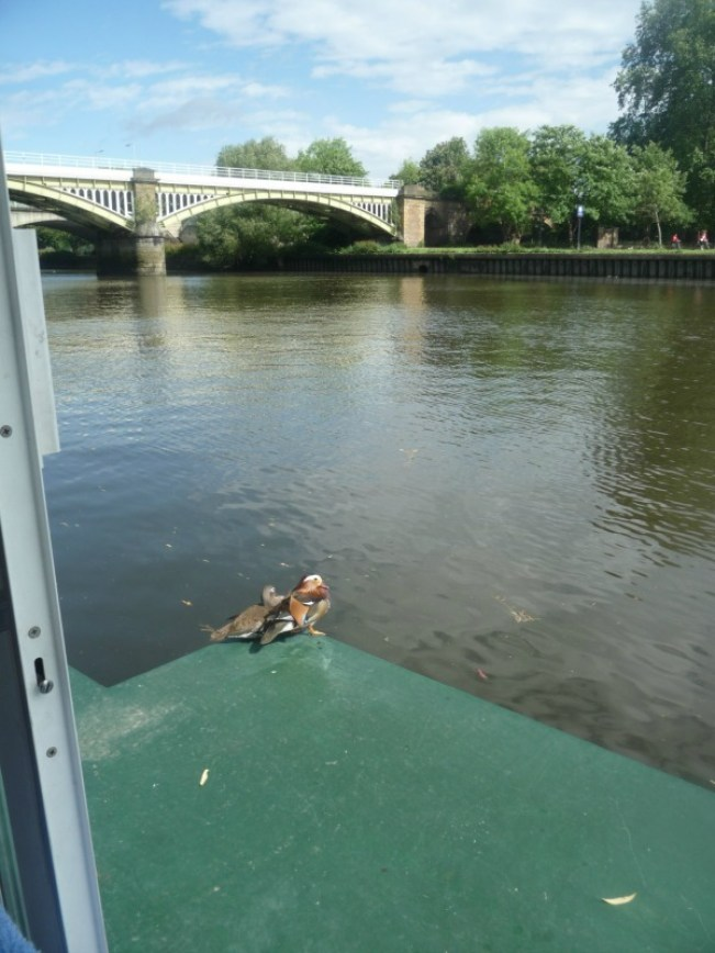 View from our houseboat in Richmond, London