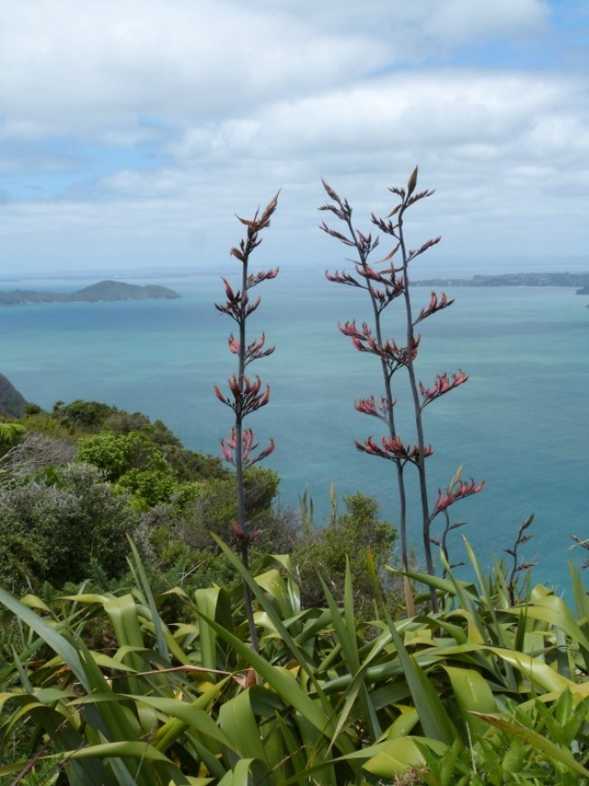 Admiring the views from the Hillary Trail in the Waitakere Ranges of Auckland, New Zealand
