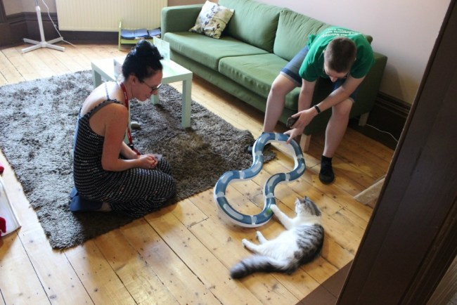 How to Spend a Perfect Day in Melbourne - visit a Cat Cafe