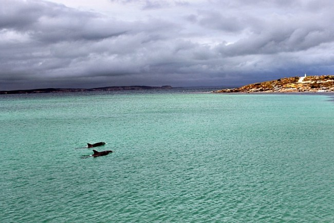 Vivonne Bay was a highlight of our self-guided 2 day Kangaroo Island tour