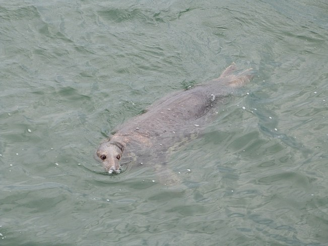 Seal in Chatham, Cape Cod - one of the best small towns in Massachusetts